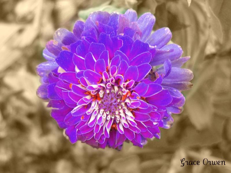 A Oldly Lighted flower