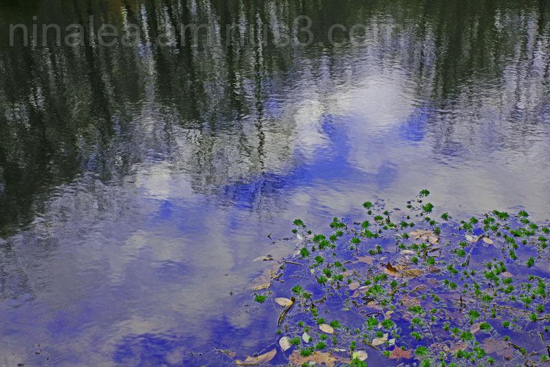 Windy Pond Reflection