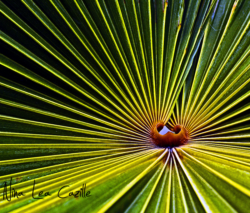 Lines of a Palm