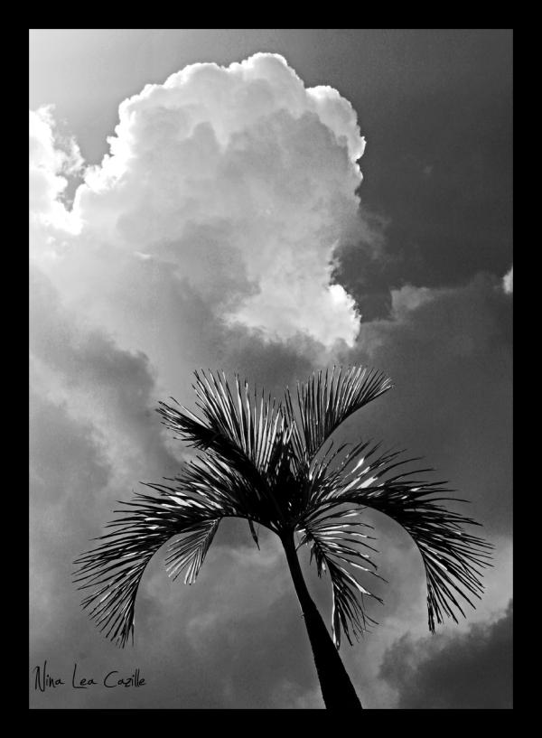 Sunny Palm