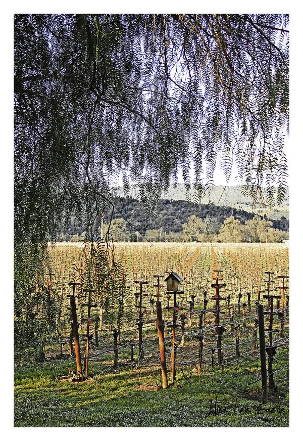 Living Among the Vines