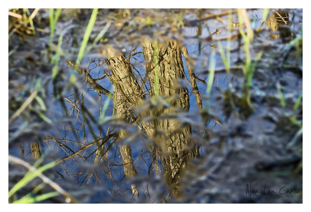 Muddy Puddle Reflections