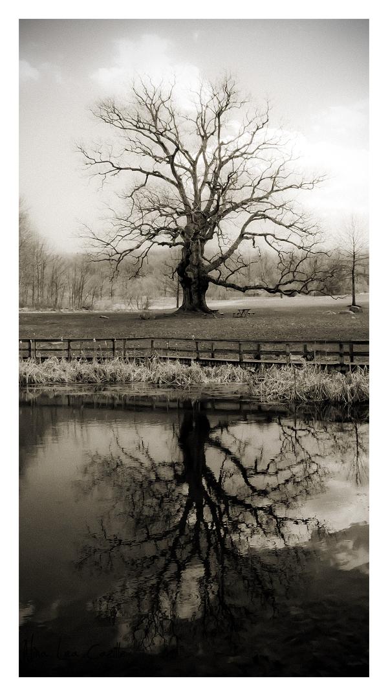 Reflections at Springton Manor