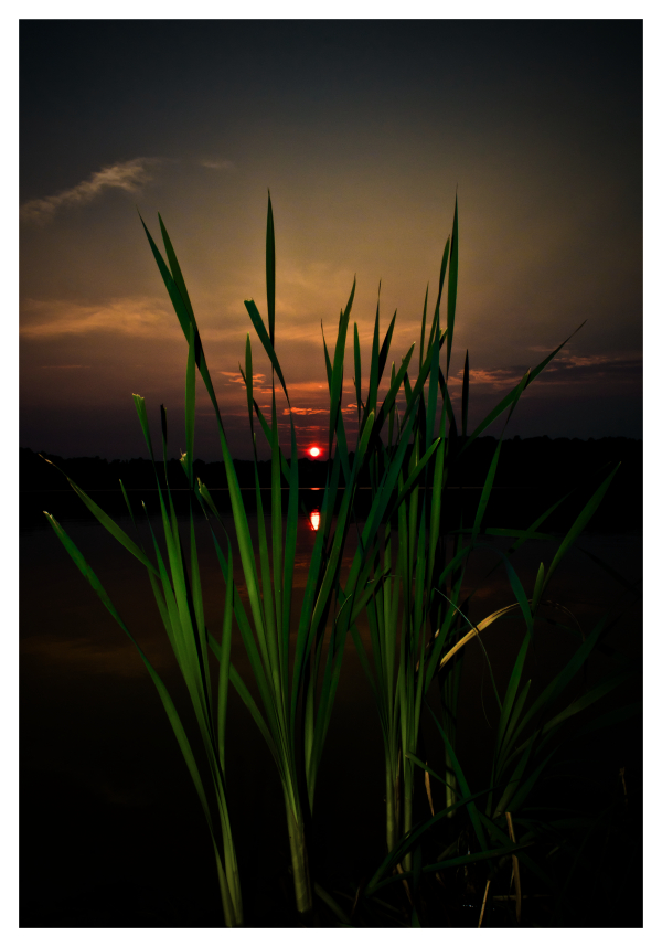 Sunset Through the Grass II