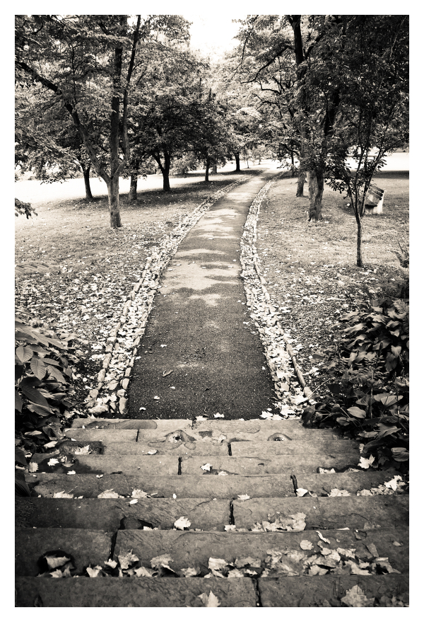Everhart Park Grove