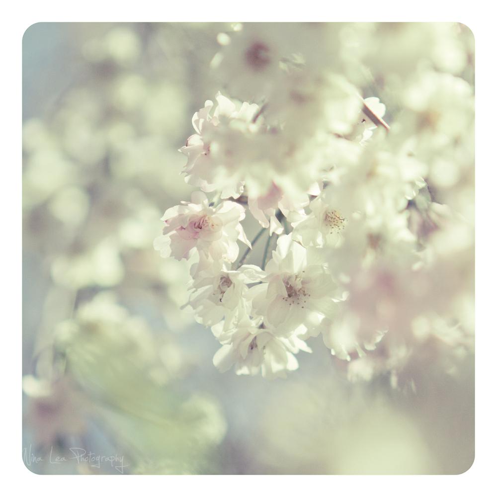 Breezy Blooms