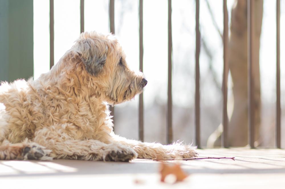 Sadie Basking in the Winter Sunshine