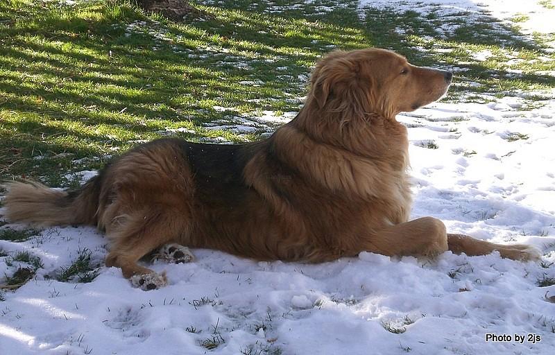 A handsome dog