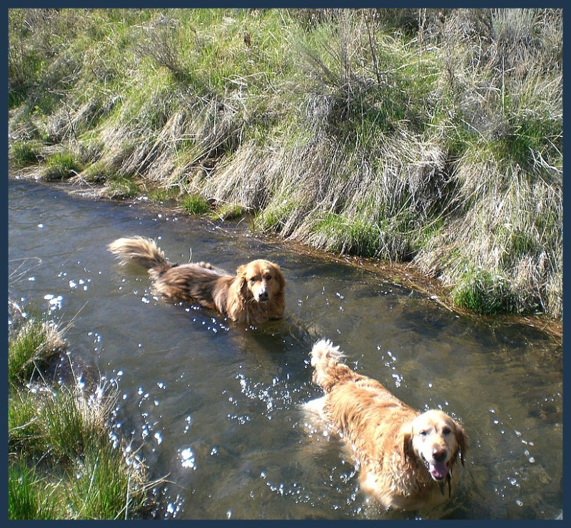 Creek dogs