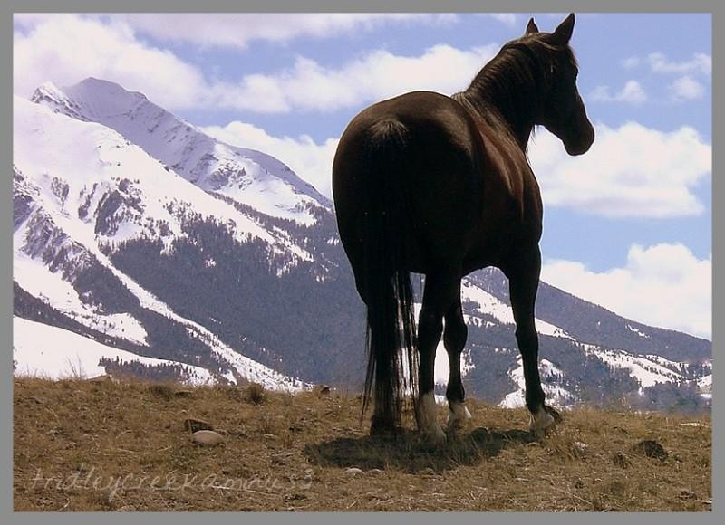 Montana    Horse    Emigrant Peak