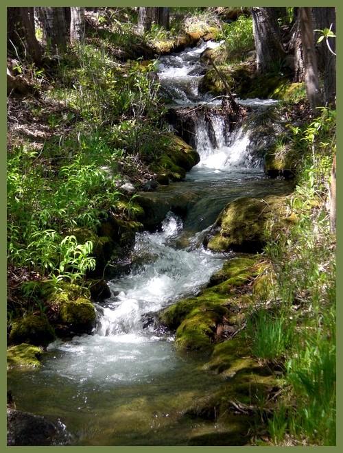 Olivia's Creek