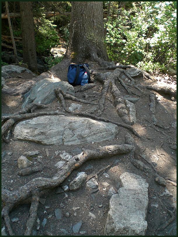 Falls 4: Tree Footage