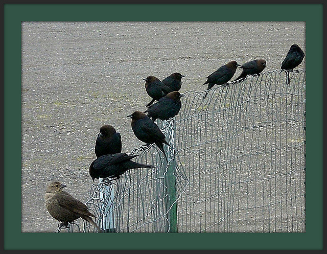 Birds on a Wire.  (Wires 2)