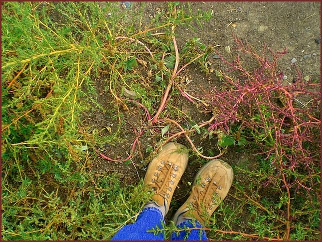 Feet again