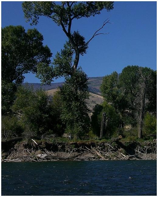 Yellowstone River    Emigrant