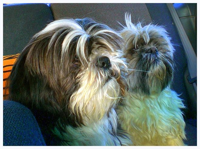 Ewoks in the Back Seat
