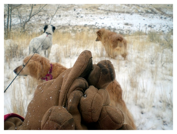 Gloves and Dogs Composition