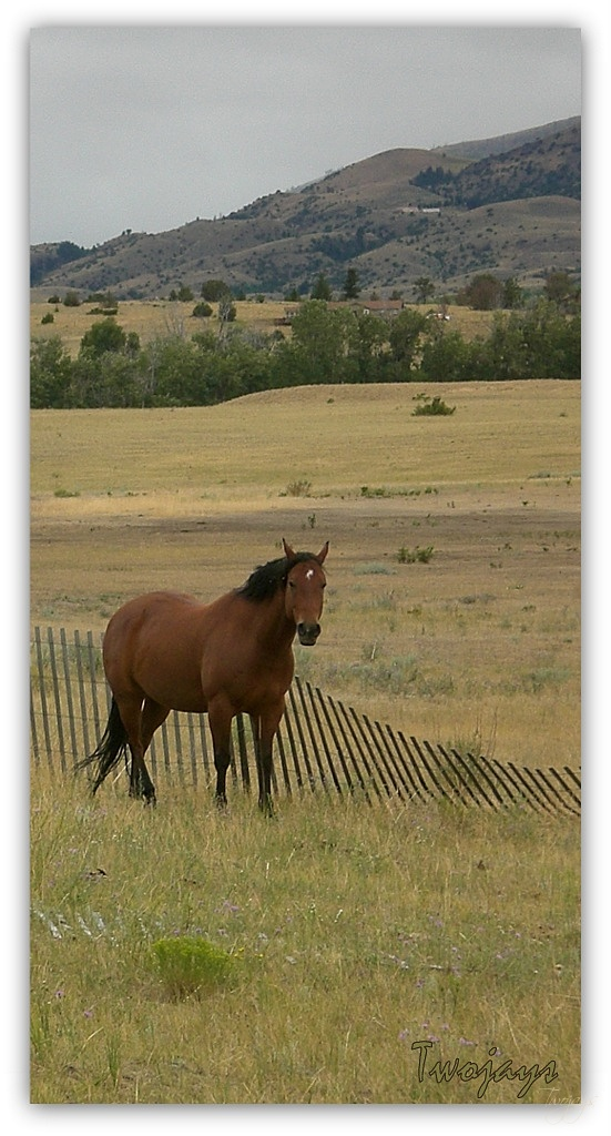 Story Ranch horse