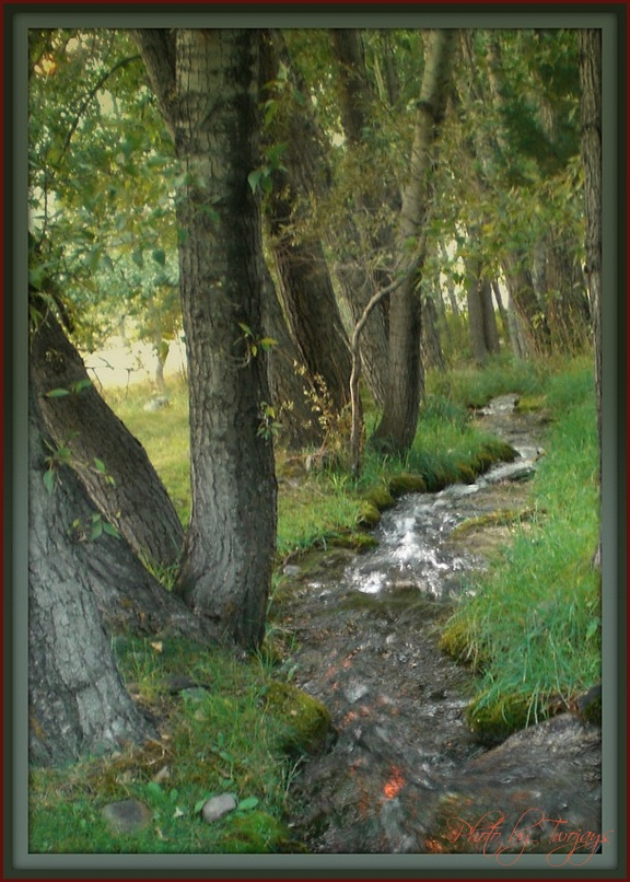 Creek Walk at Dawn