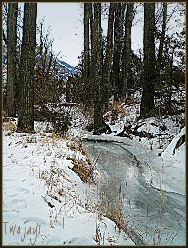 Frozen Fridley Creek 2