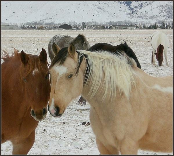 Paradise Valley Horses      Montana