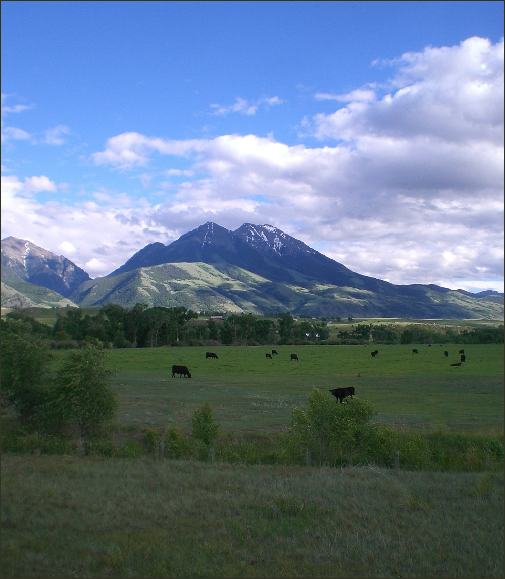 Black Angus and the Absaroke Mountains.