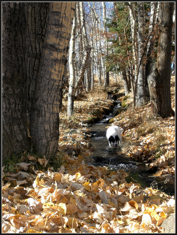 Cool Spring Water and Crunchy Leaves
