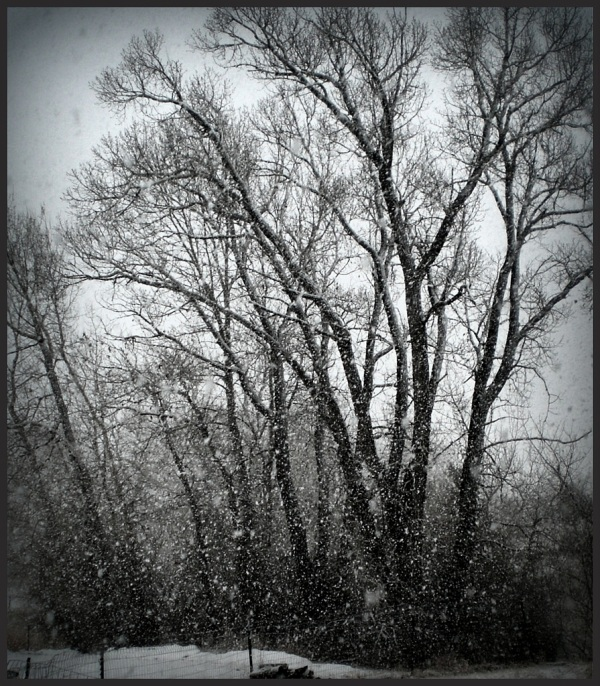 Spring Snow Fall