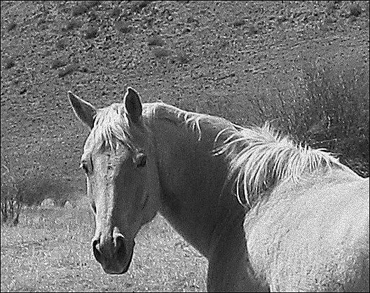 Springtime  Paradise Valley horse