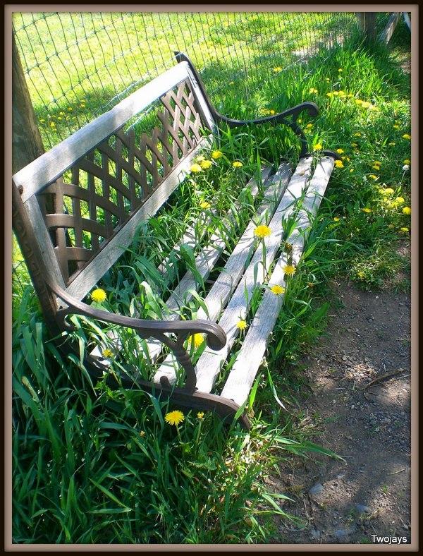 Happy bench.