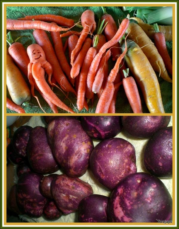 Home harvest, organic grown veggies