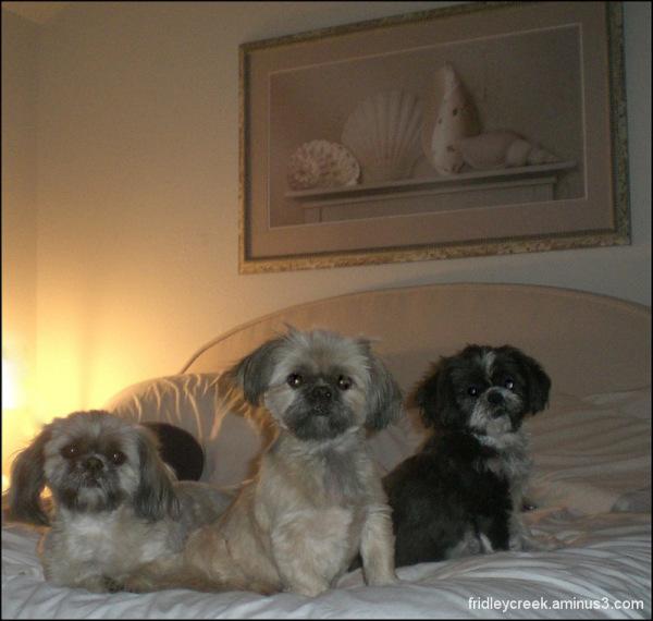Three Lil Shizzoos