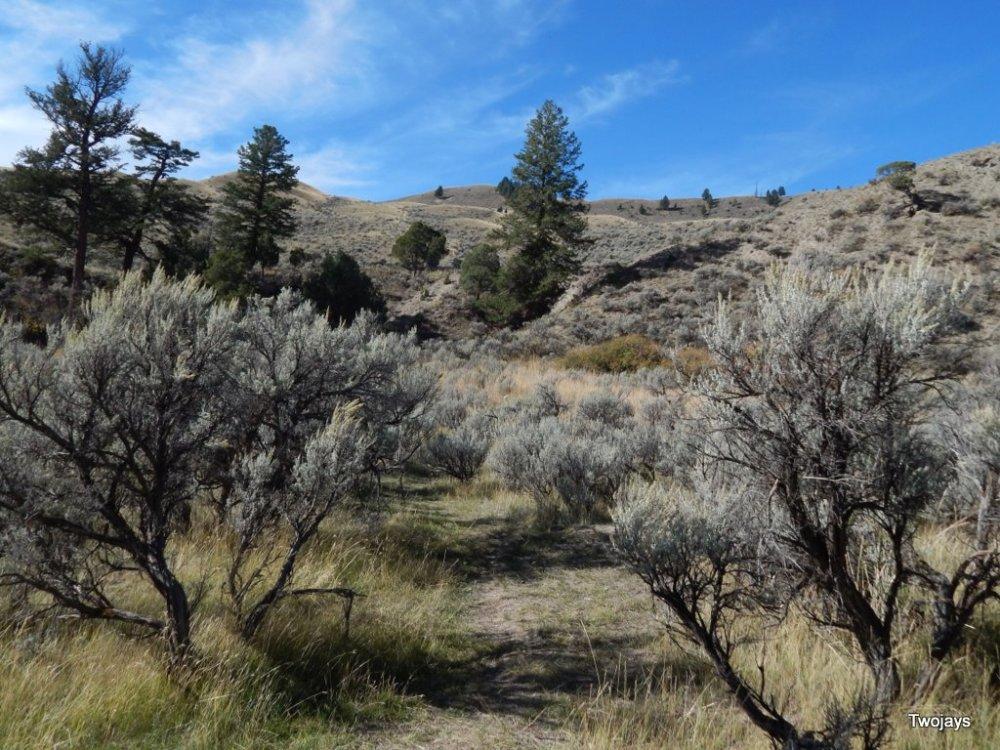 Sage Forest.