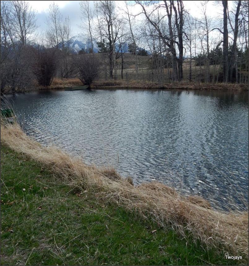 Transitioning Pond.