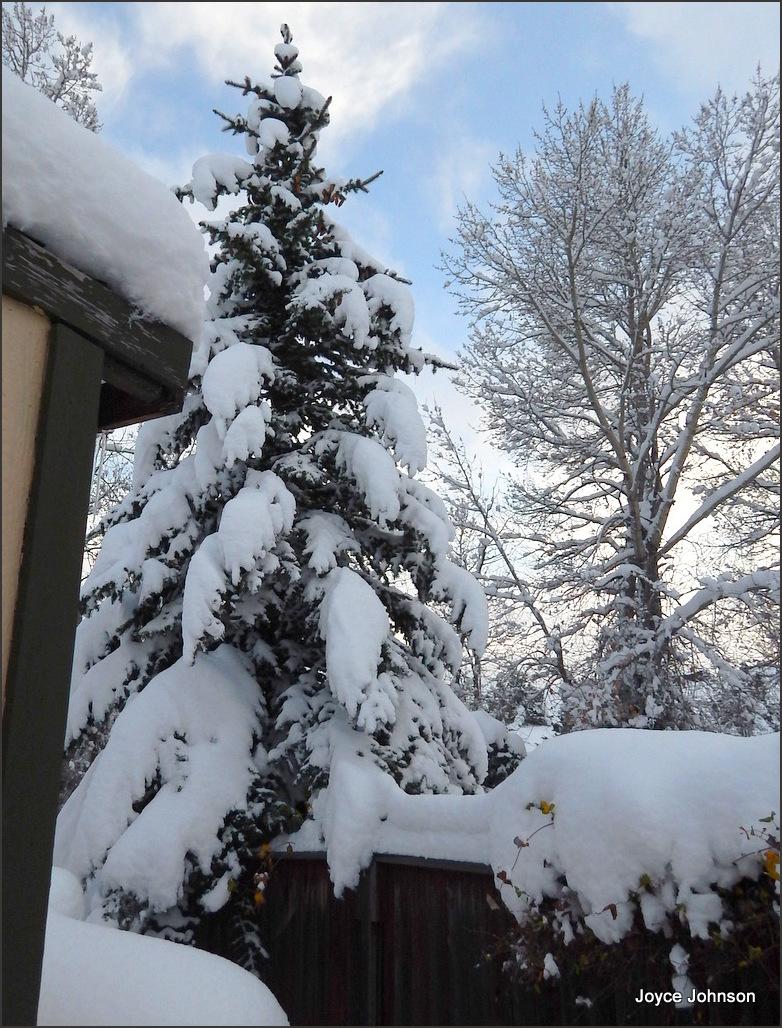 fat snow 3.
