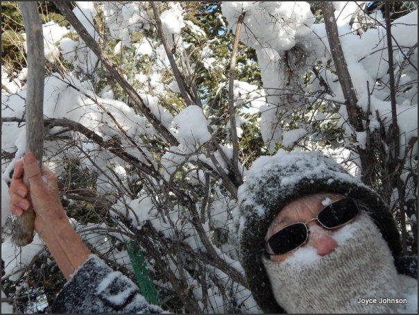 Snowy tree 10 points, Joyce zero