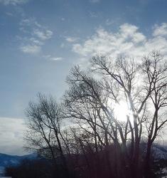 Suncatcher Tree