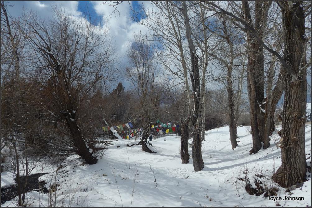 Snowy Creek 2