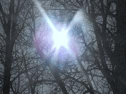 Those sun catching cottonwoods