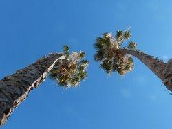 L.A. palm tree buddies