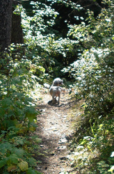Pine Creek #1   One Happy Little Dog