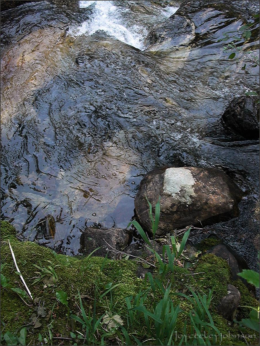 Creek Portrait