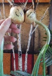 Onion Buddies