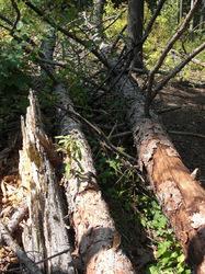 More Tree fall