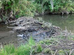 Beaver Dam Class #1