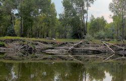 Riverside Tree Fall Reflection