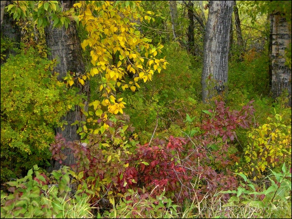 Fall Bushes