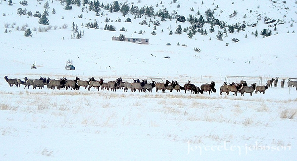 Montana wildlife 3