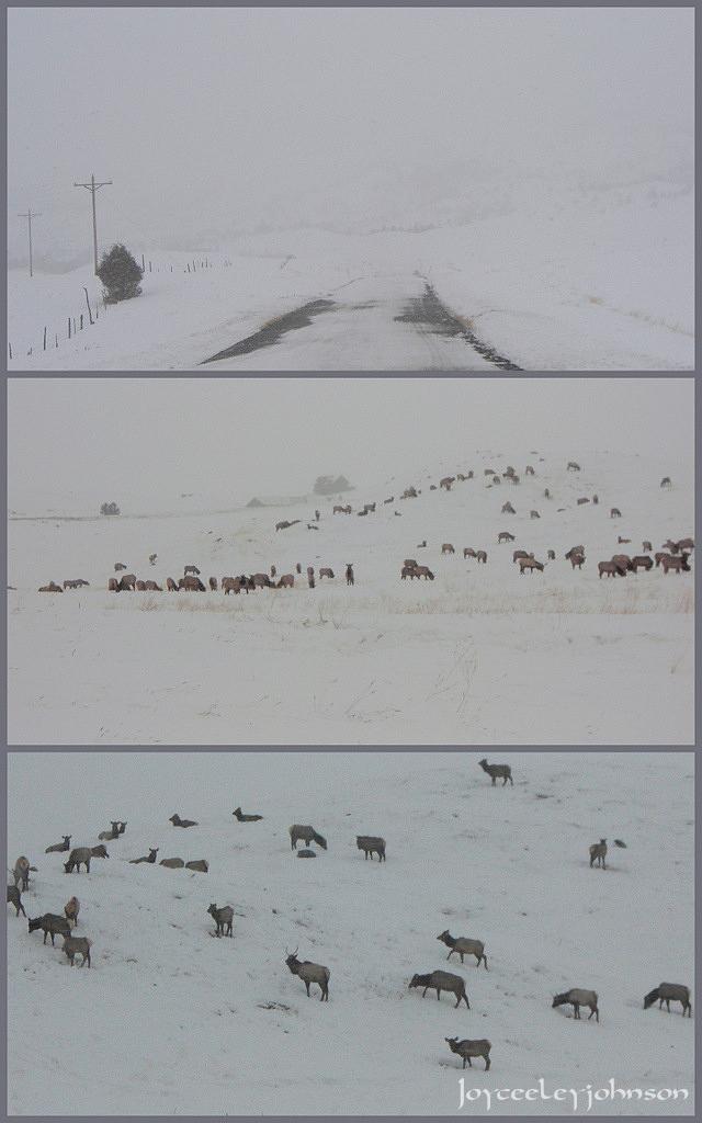 snowy elk conference