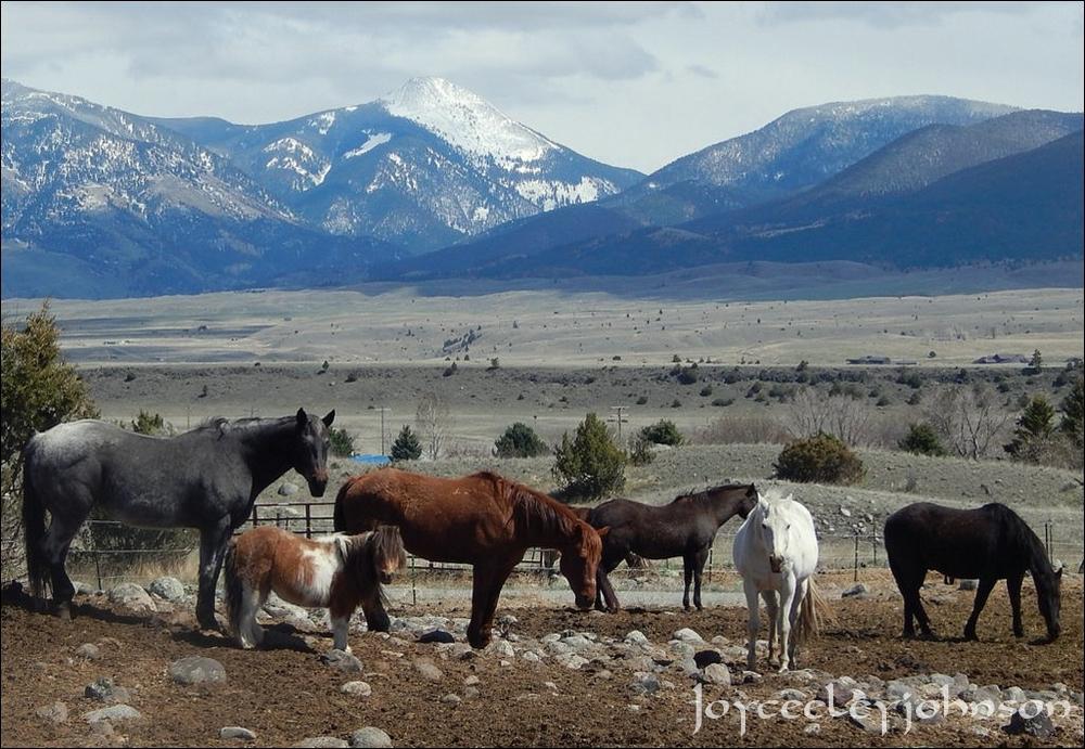 Shetland pony and friends.
